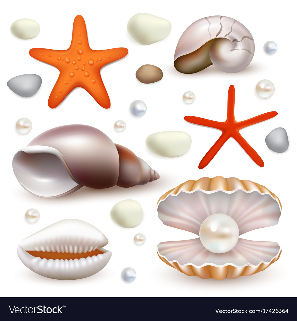 Realistic seashell and starfish icon set