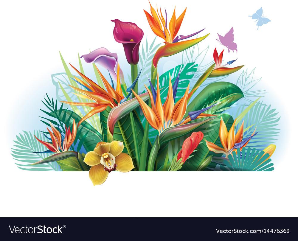 Arrangement with strelitzia flowers