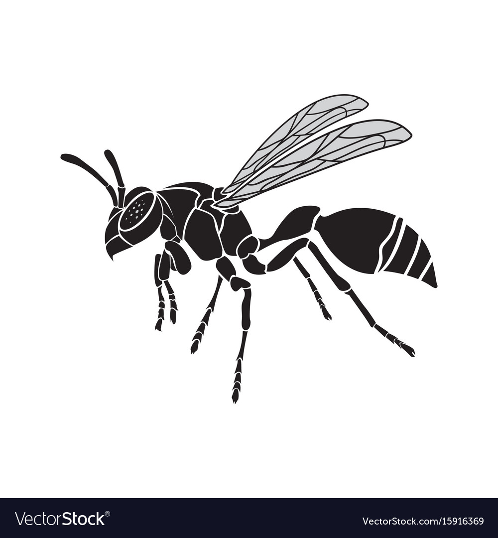 Wasp on a white background insect animal