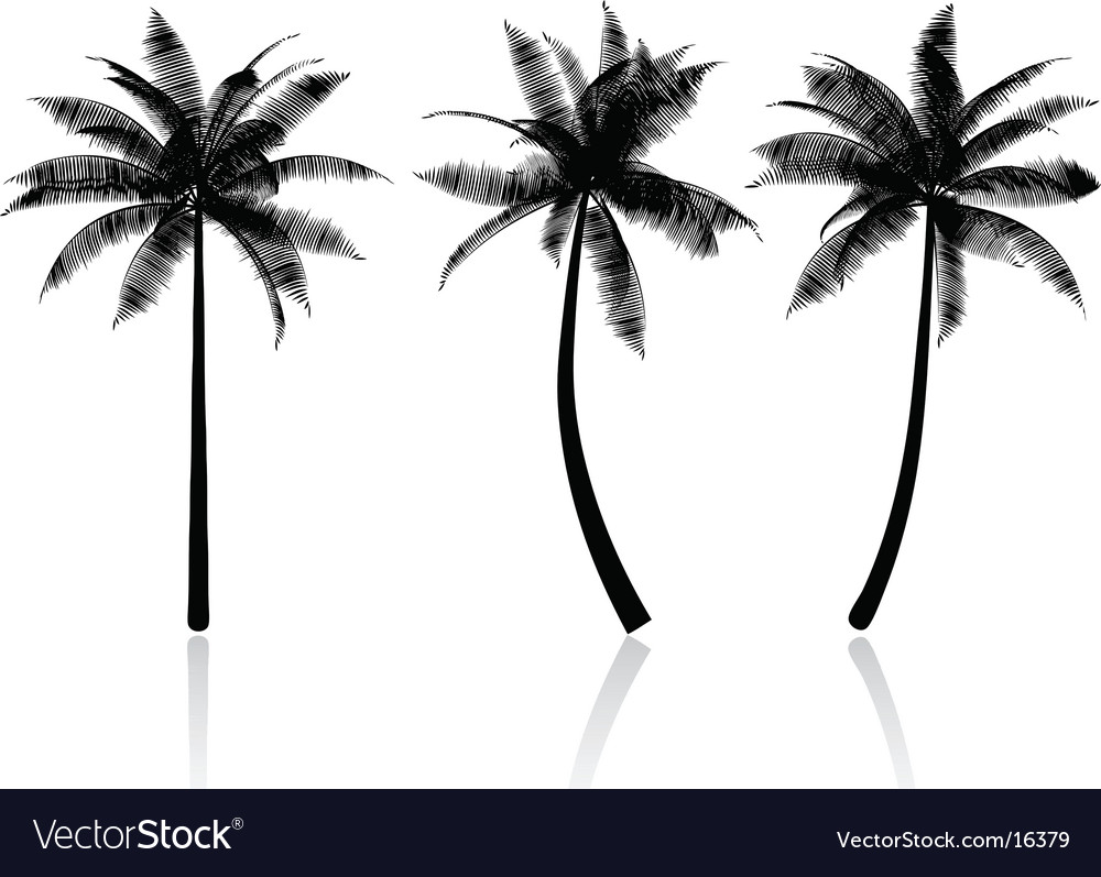 Palm tree graphics