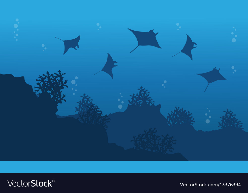 silhouette of stingray and reef underwater vector image