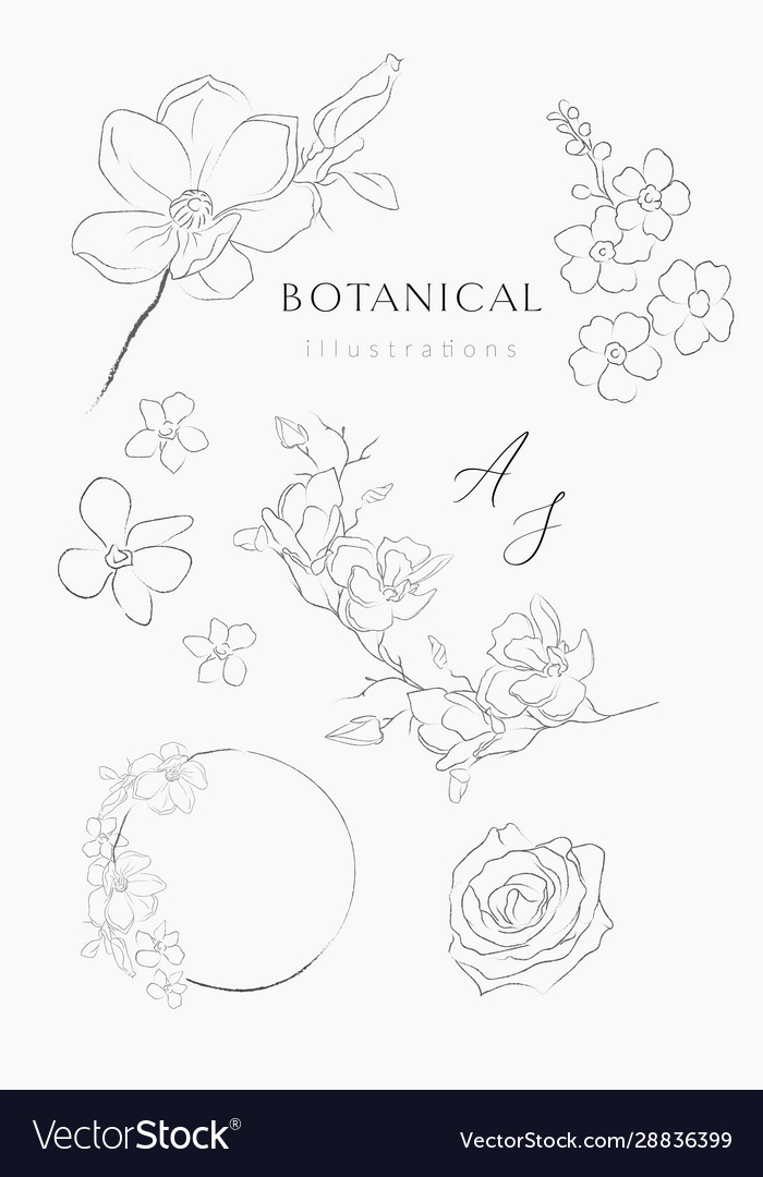 Line drawing floral wreaths frames branches