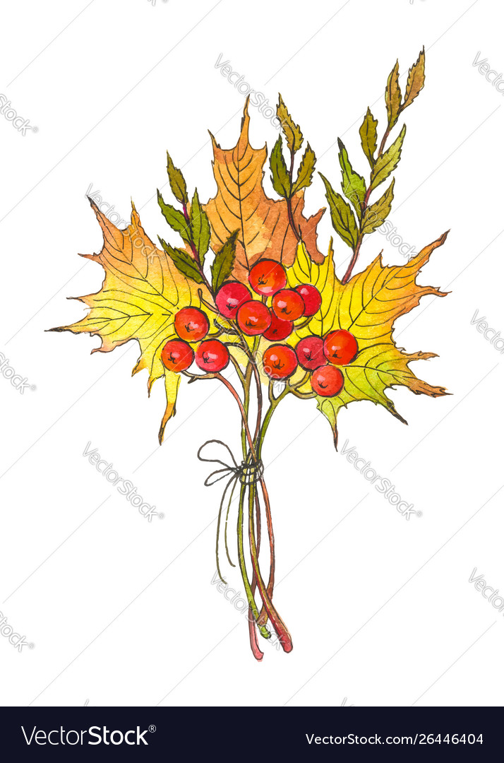 Watercolor Drawing Autumn Bouquet Royalty Free Vector Image