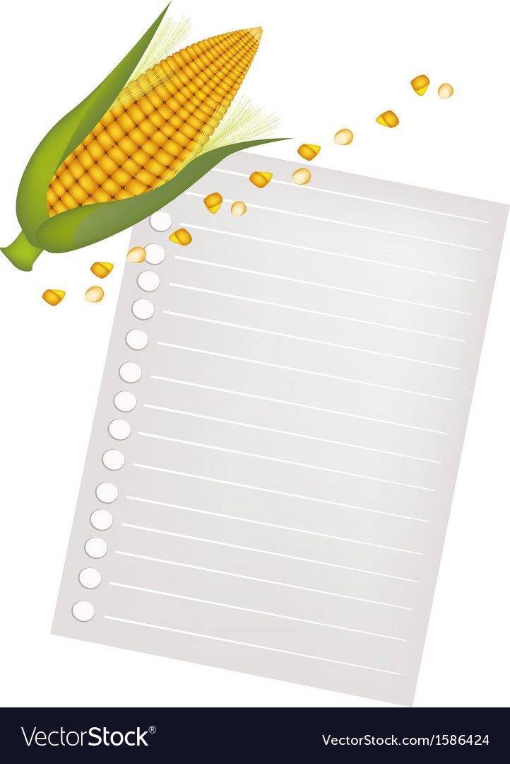 Ears of Yellow Corns with A Blank Paper