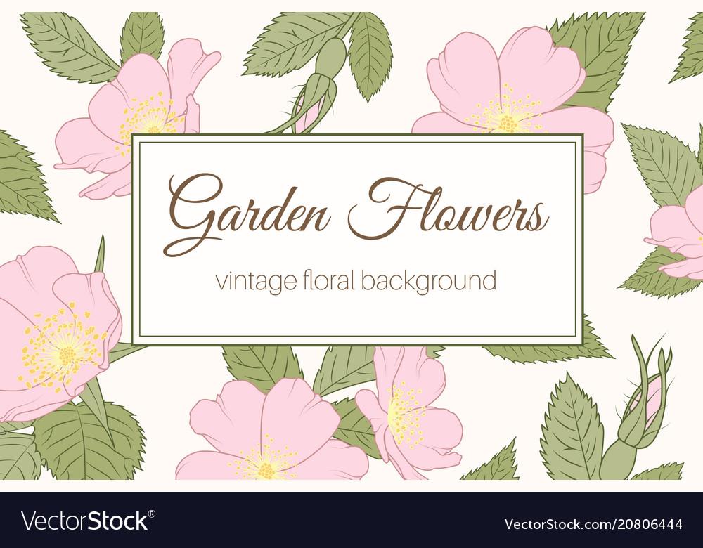 Garden flowers wild rose vintage banner background