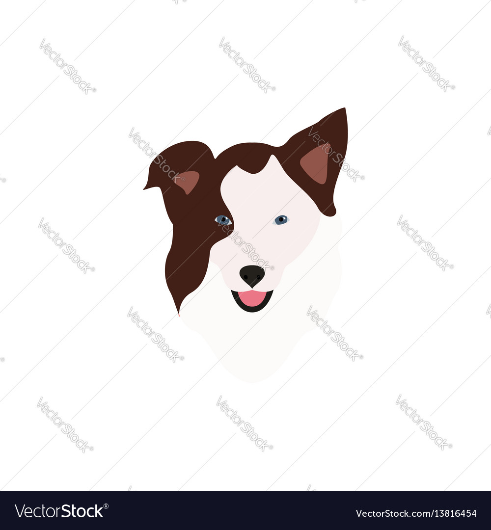 Border collie brown head vector image