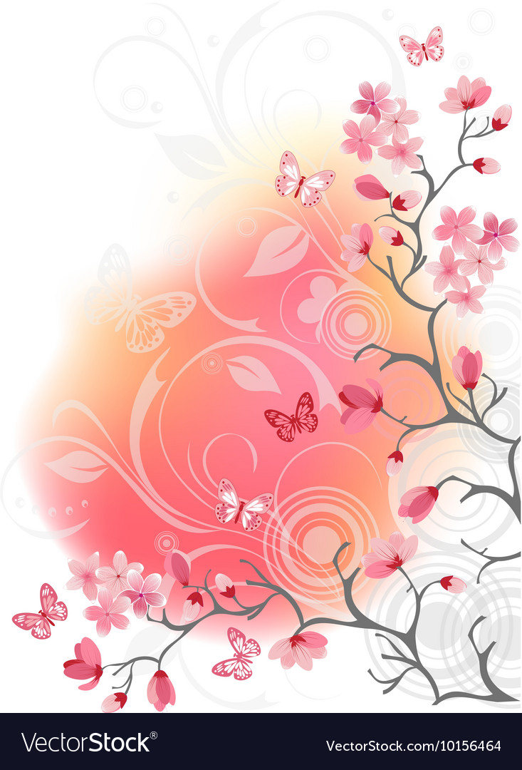 Cherry Blossom Tree White Background Royalty Free Vector