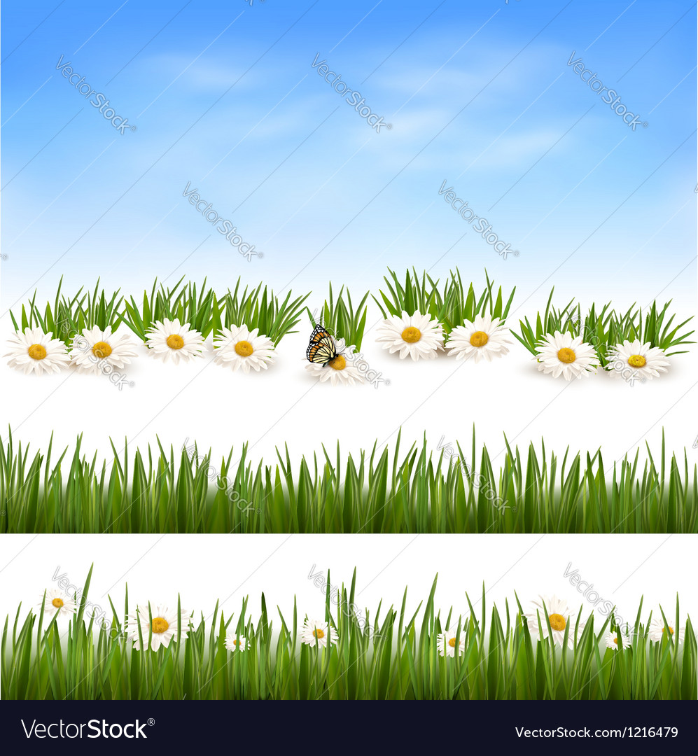 Collection Of Green Grass Backgrounds Royalty Free Vector