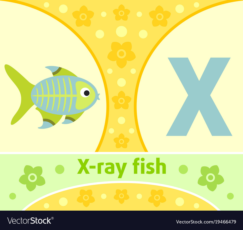 The english alphabet with x-ray fish
