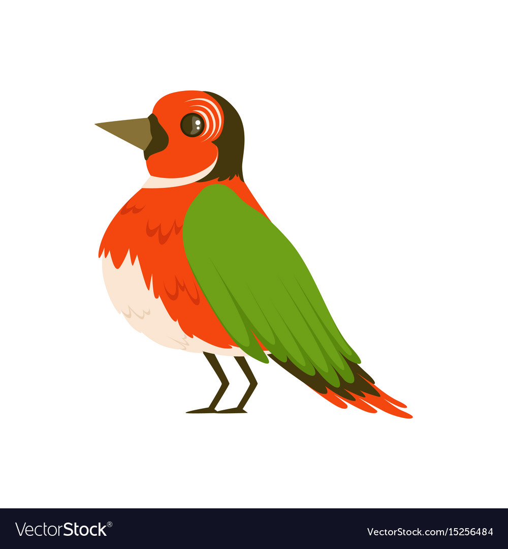 Colorful bird vector image