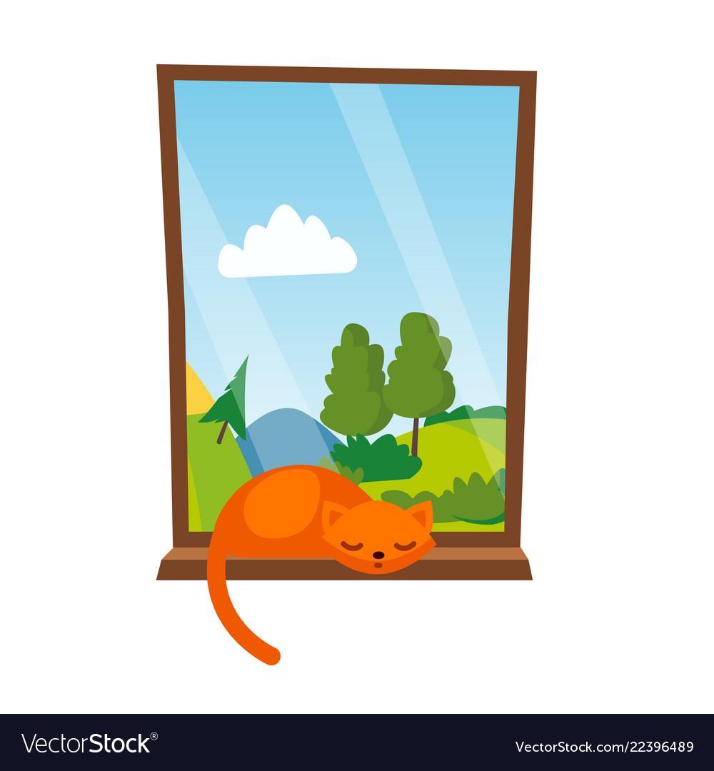 Cat sleepping on the window isolated