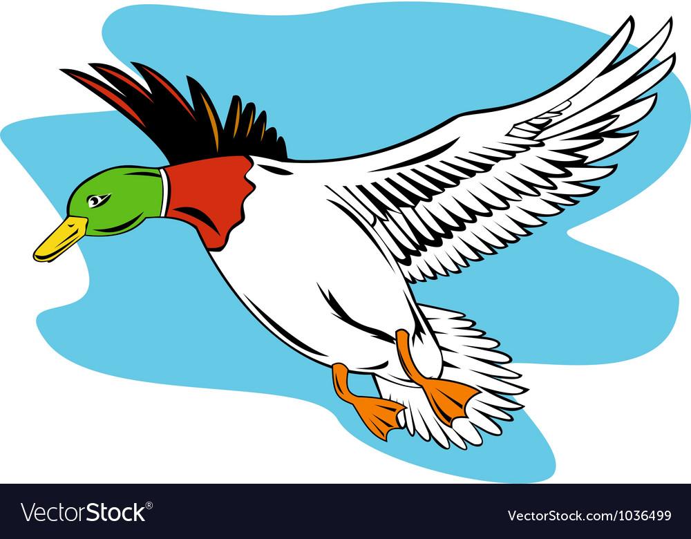 Mallard Duck Flying Royalty Free Vector Image Vectorstock