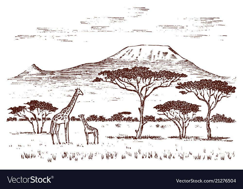 Vintage african landscape safaris and wild