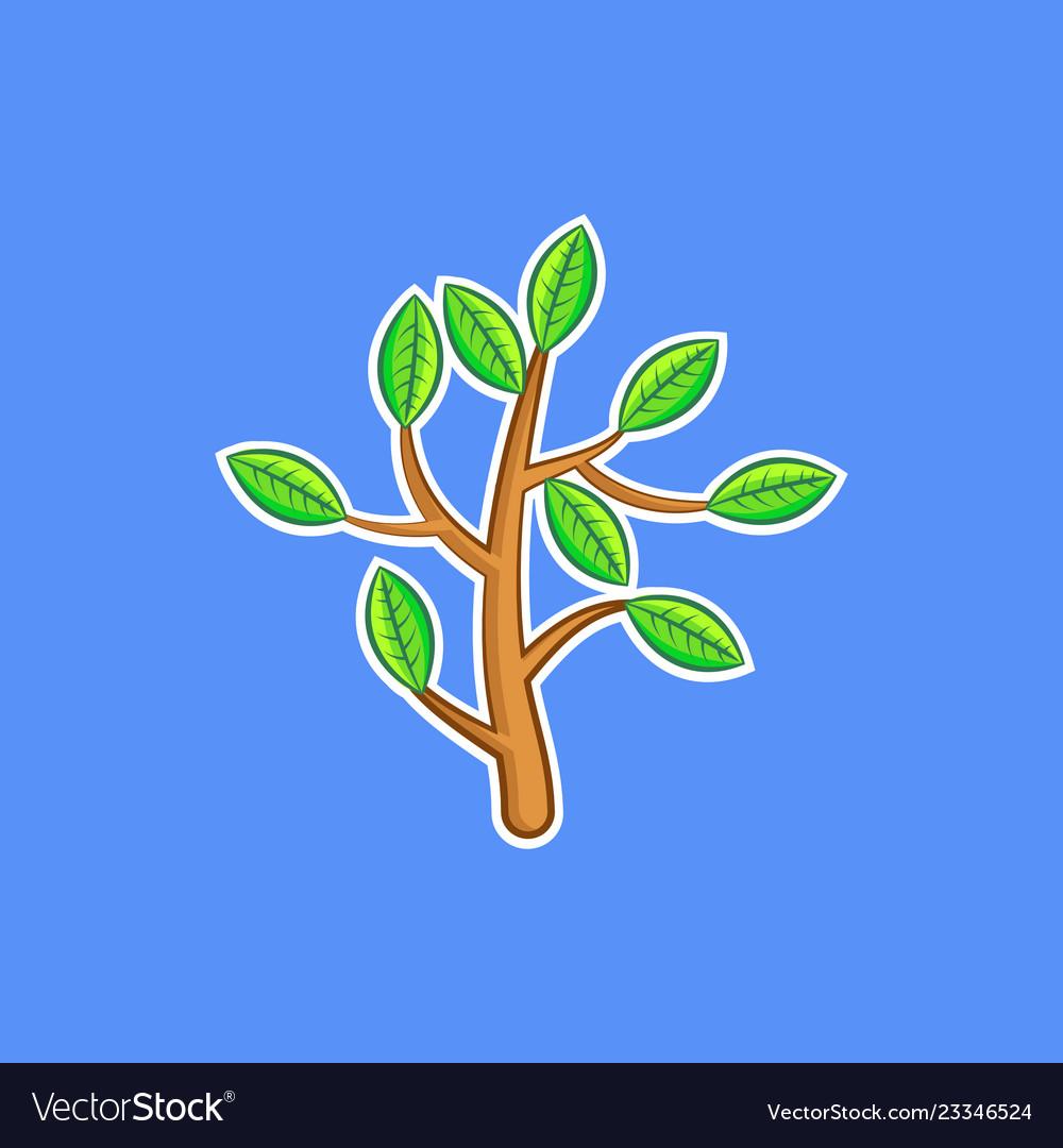 A bush branch