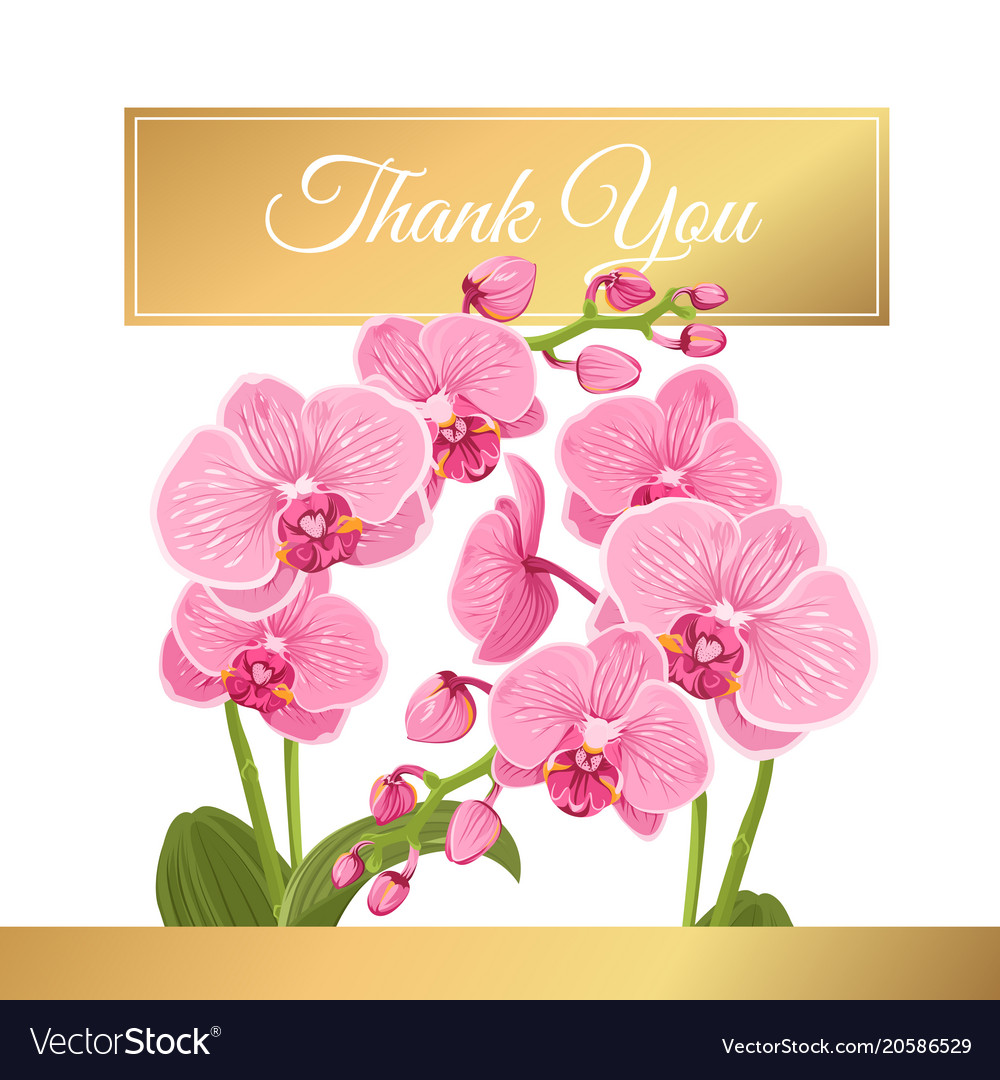 Orchid phalaenopsis flowers bouquet thank you card