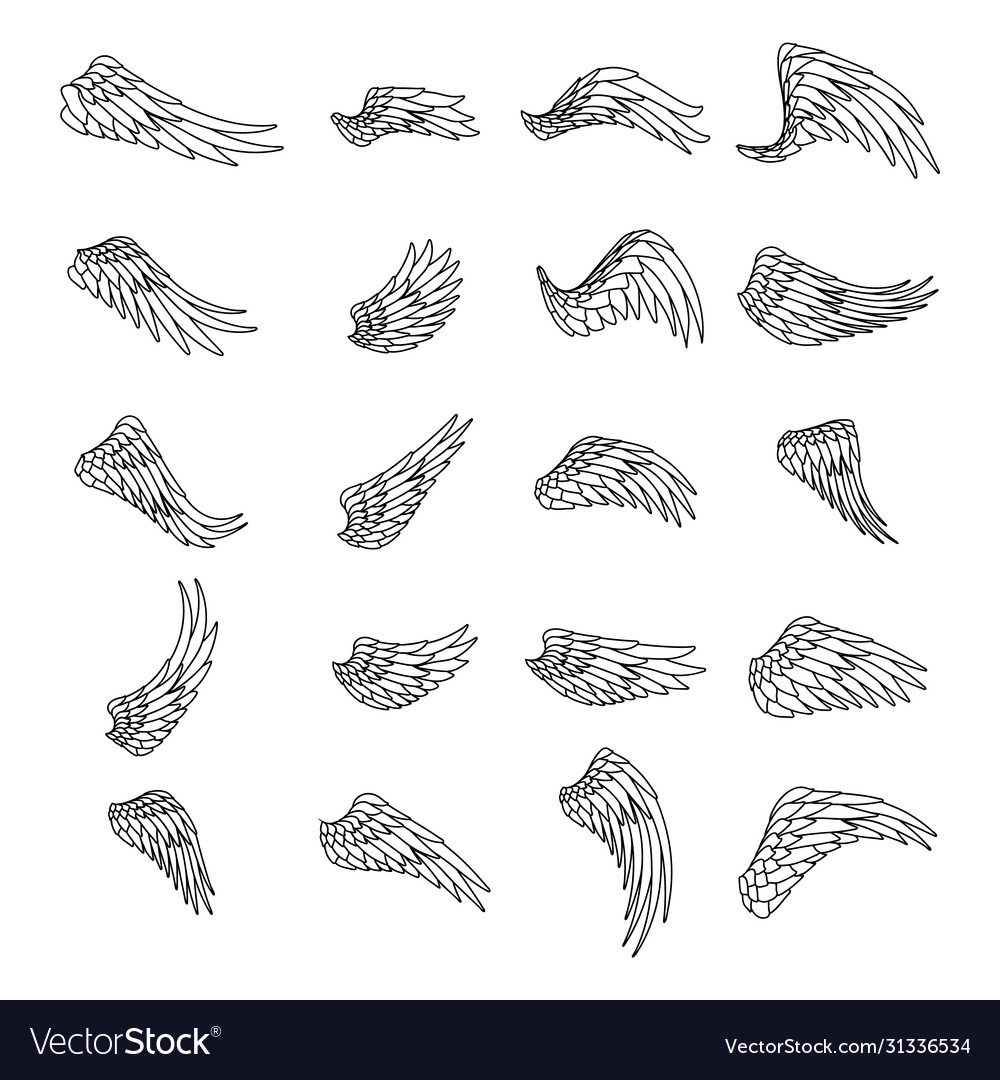 Lineart isolated wings bird animal angel fly