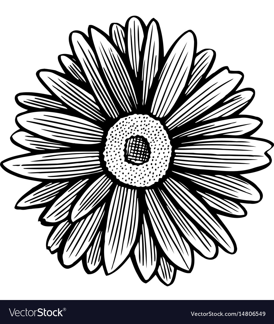 Black and white daisy flower vector image