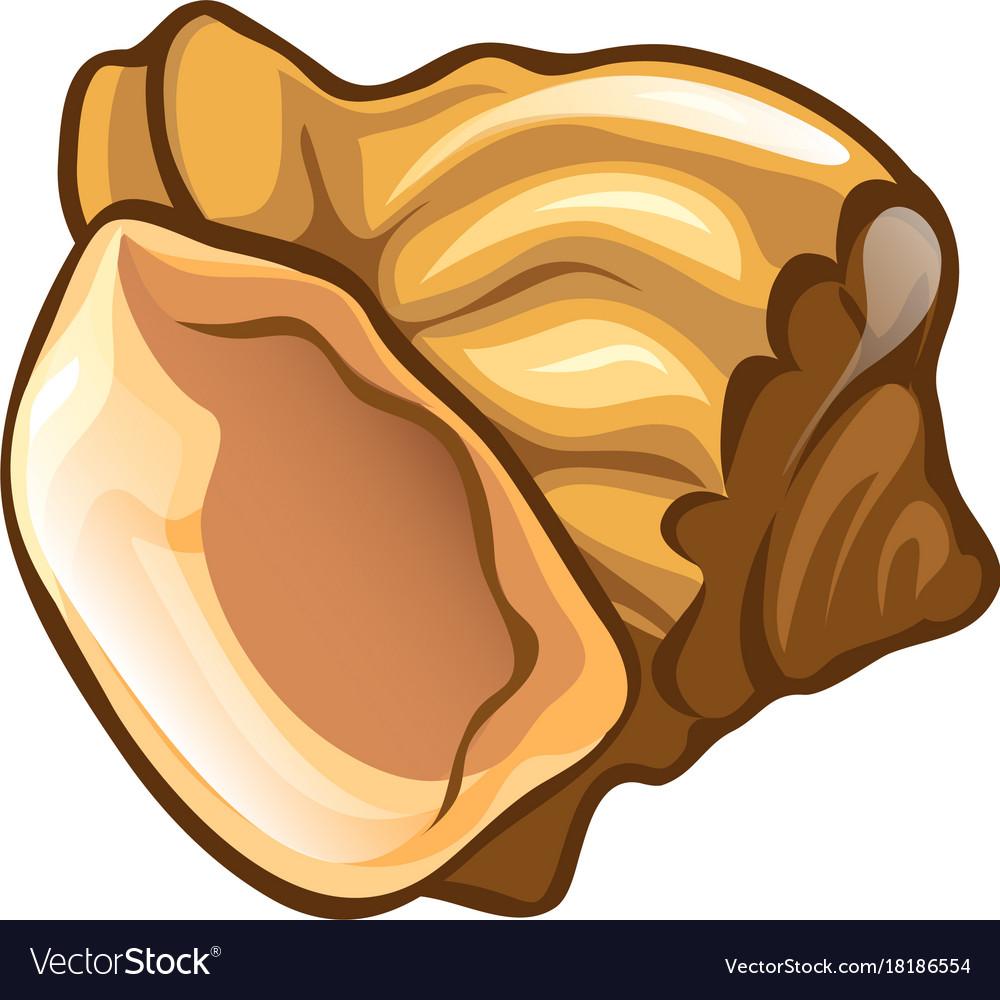 Seashell isolated scallop nature sea shell