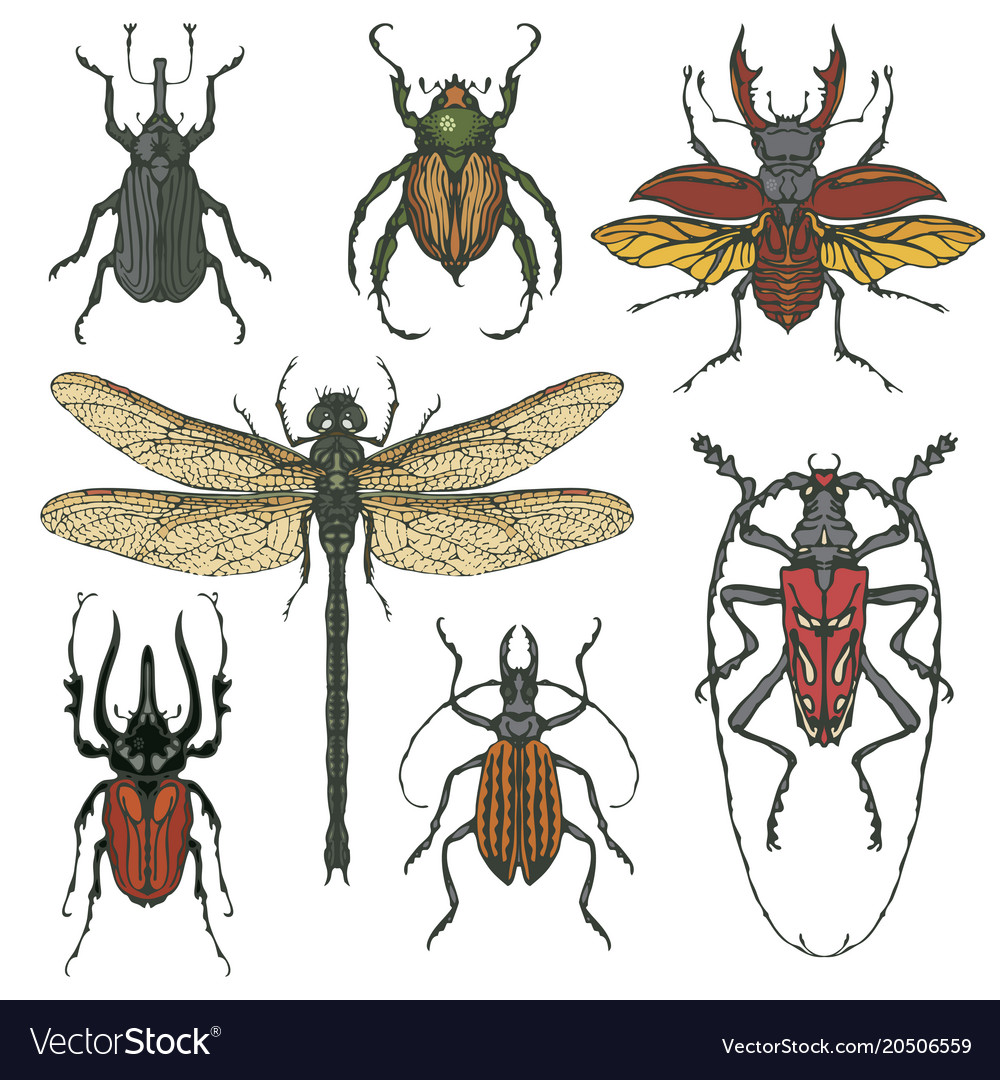 Set of various insects in hand drawn style