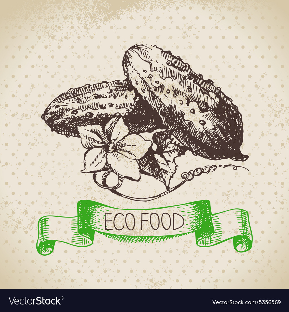 Hand drawn sketch cucumber vegetable Eco food