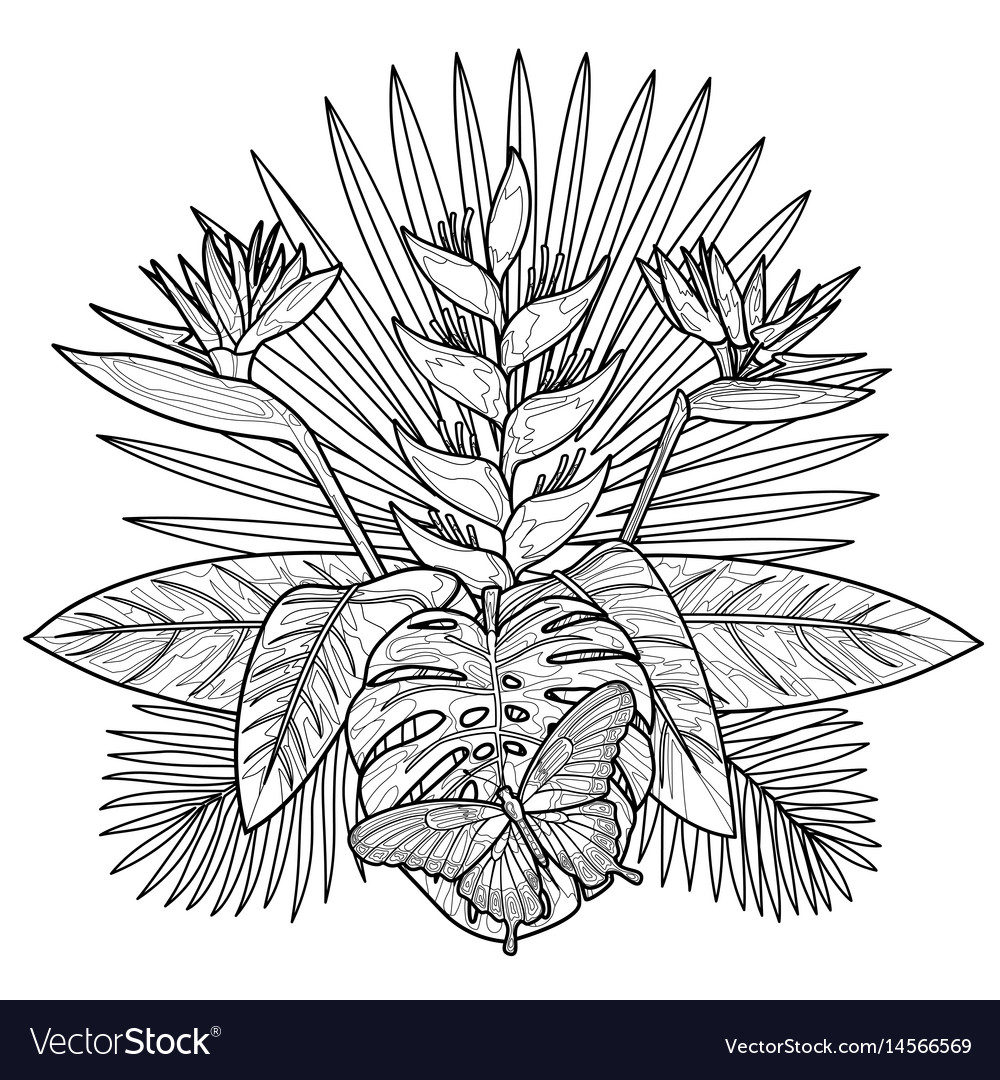 Tropical Bouquet Coloring Page Royalty Free Vector Image