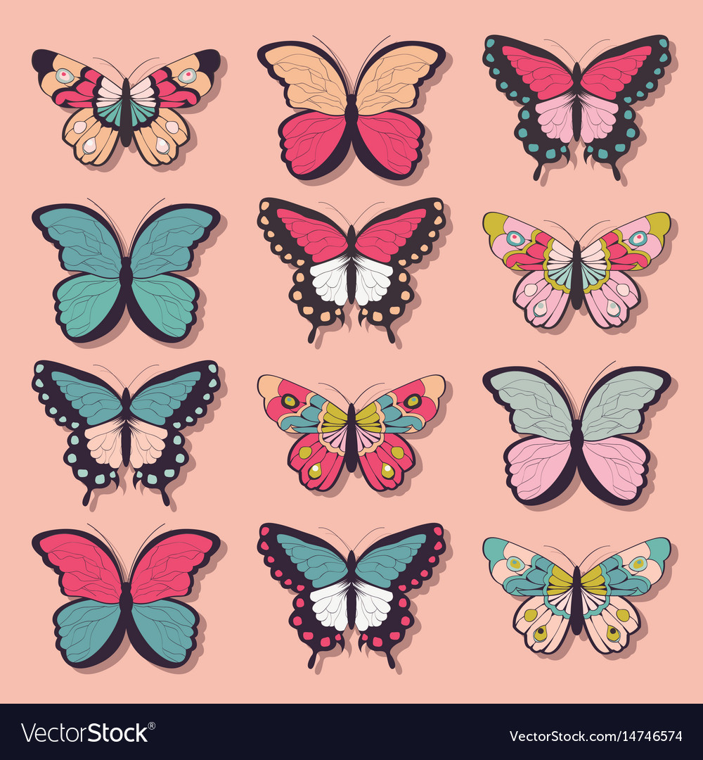 Collection twelve colorful butterflies