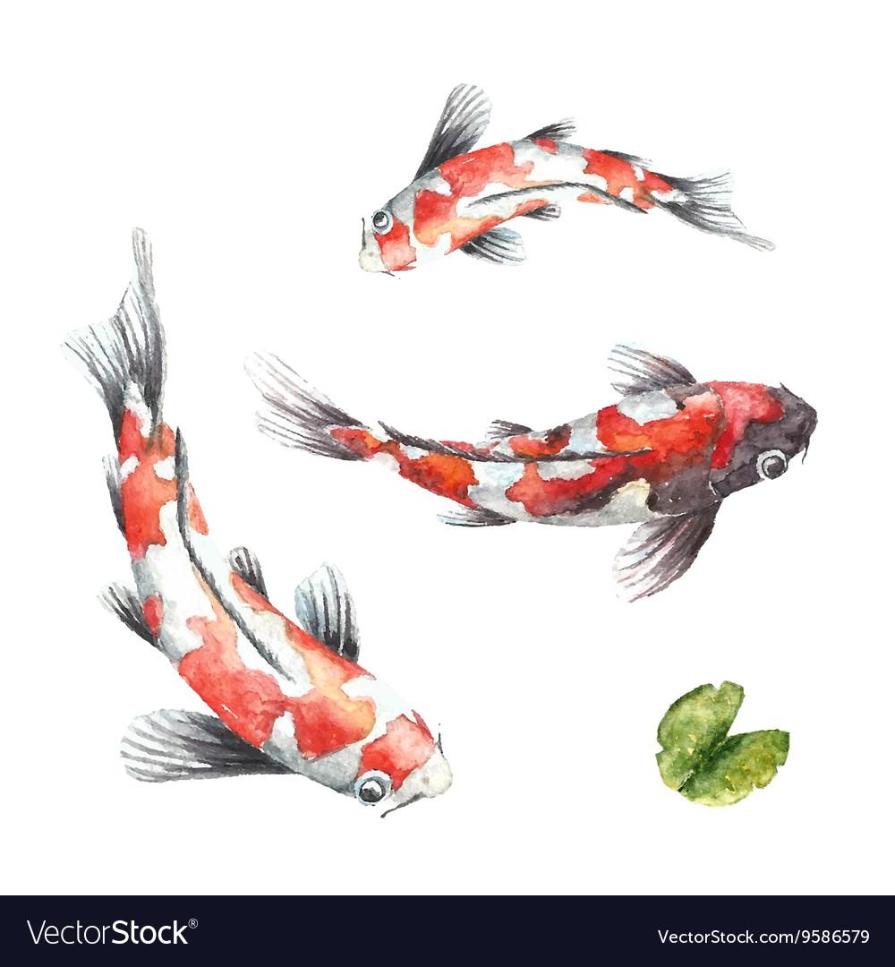 Three Koi fish on white background vector image
