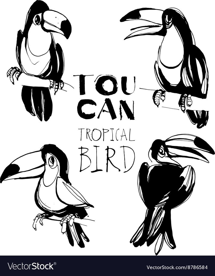 Tropical summerset with toucan birds Ink splatter
