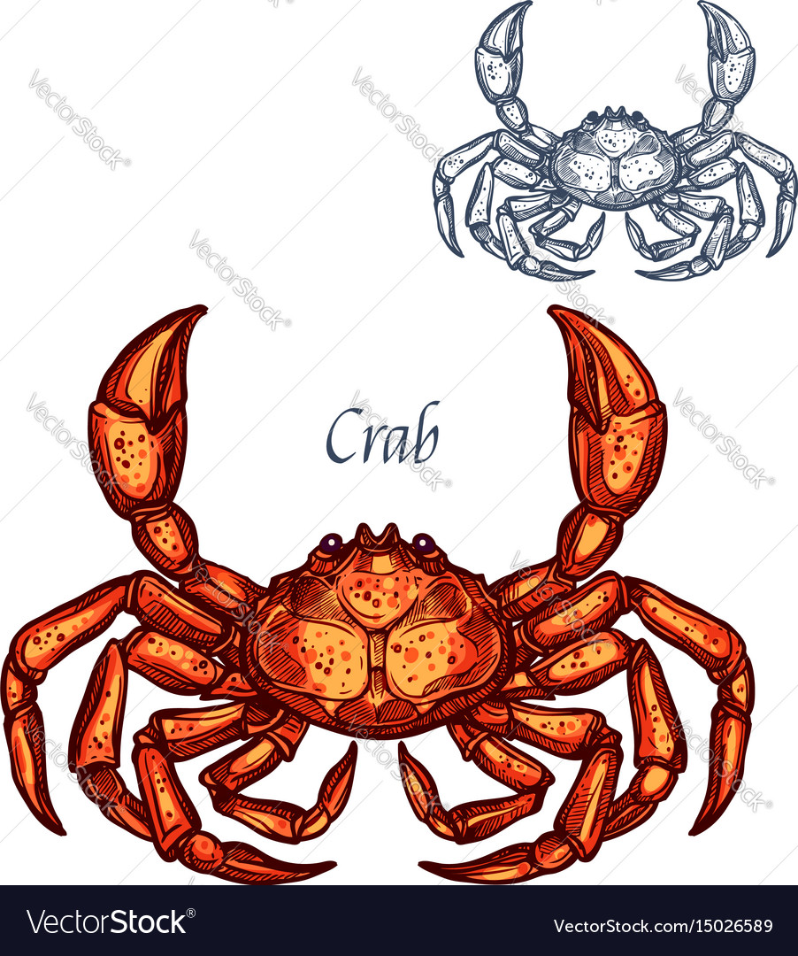 Crab lobster seafood isolated sketch icon