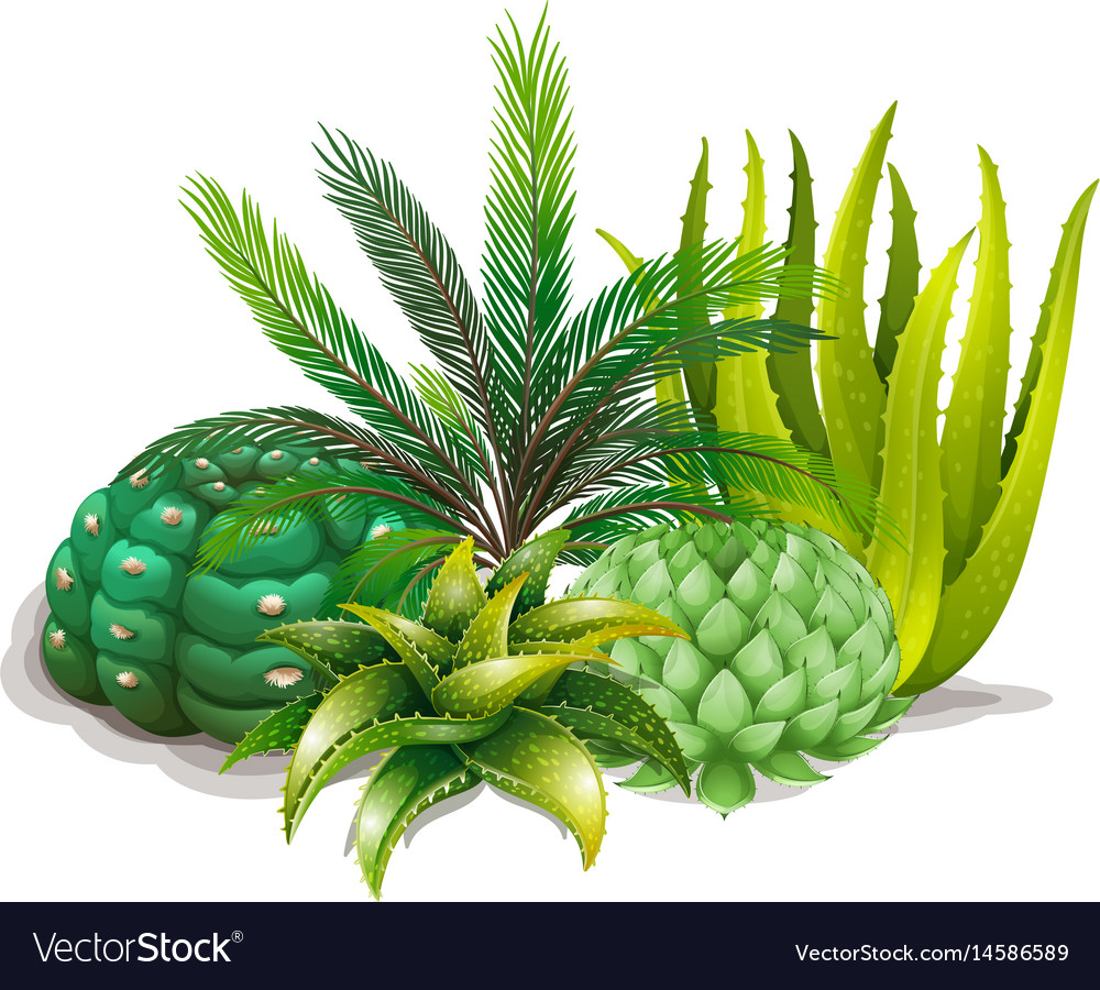 Different types of plants in one garden vector image