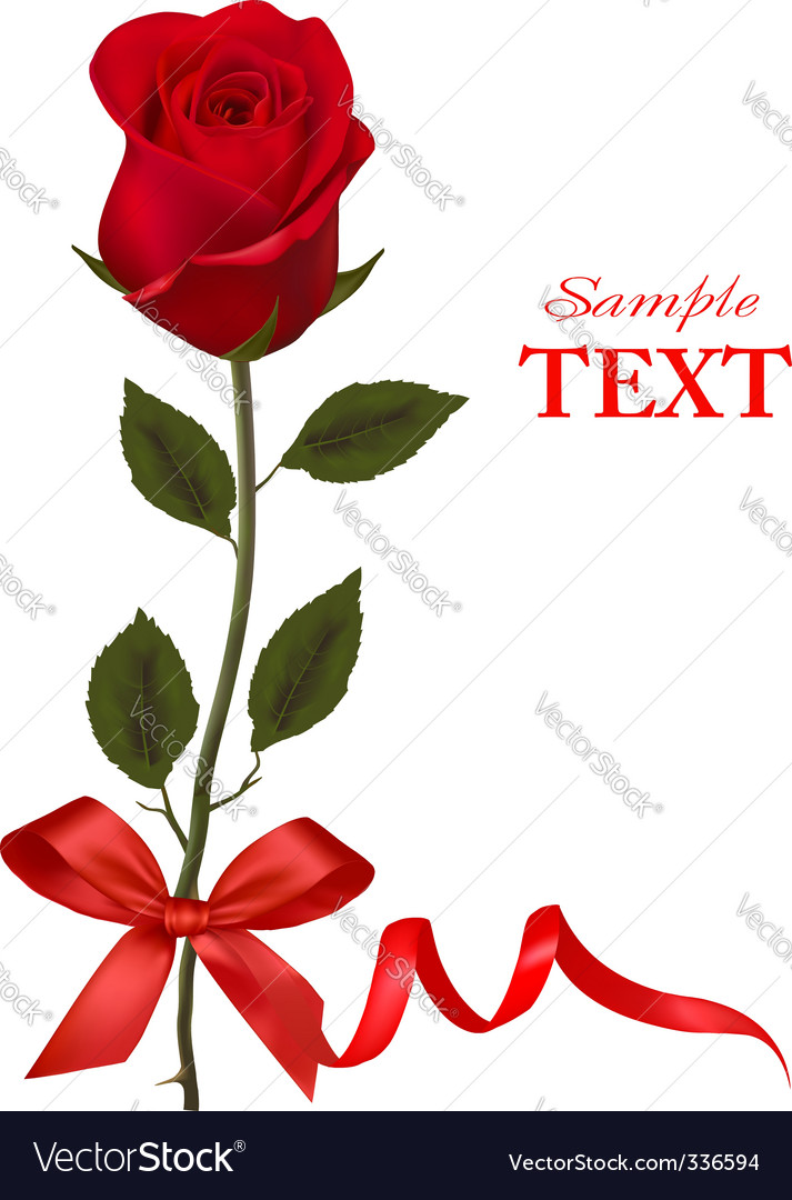 Beauty red rose with ribbons