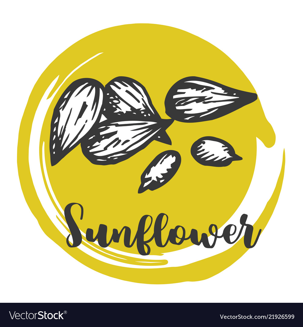 Sunflower seed vintage hand drawing of seeds