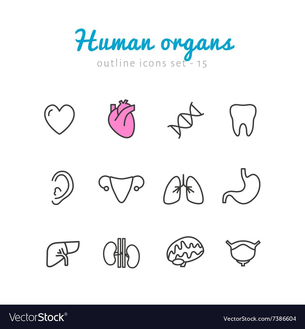 Set Of Human Organs Icons Royalty Free Vector Image Torso Diagram