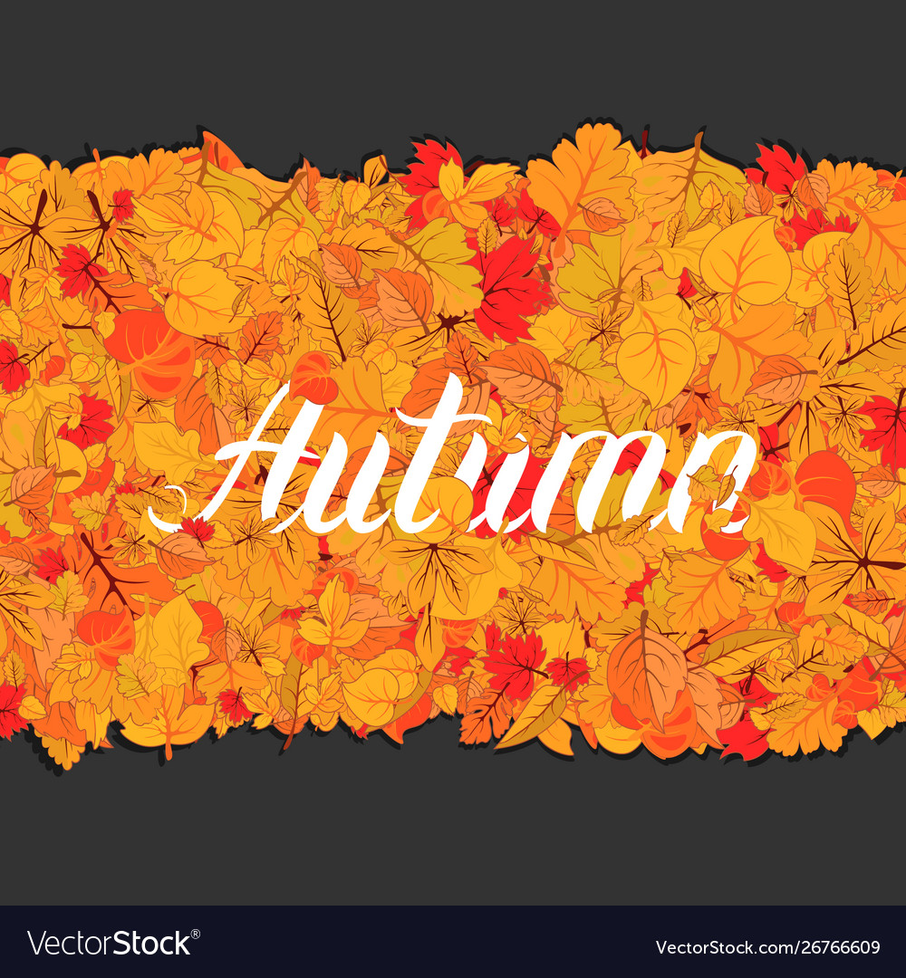Autumn leaves fall isolated background golden