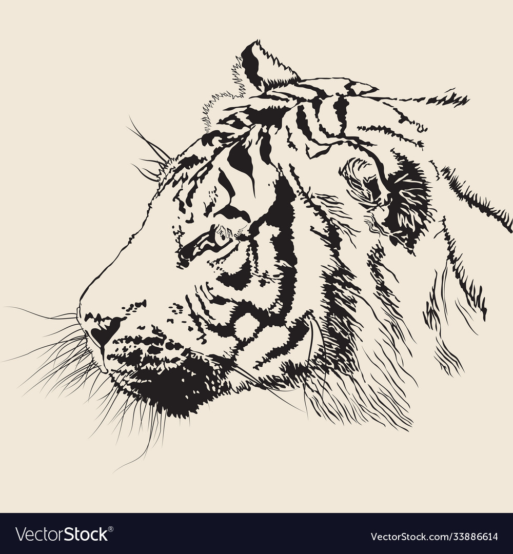 Black and white banner with a realistic tiger head