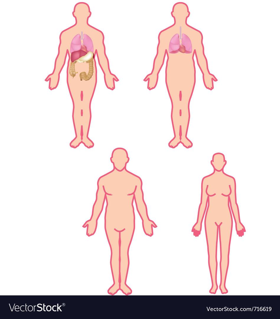 Human Anatomy Royalty Free Vector Image Vectorstock