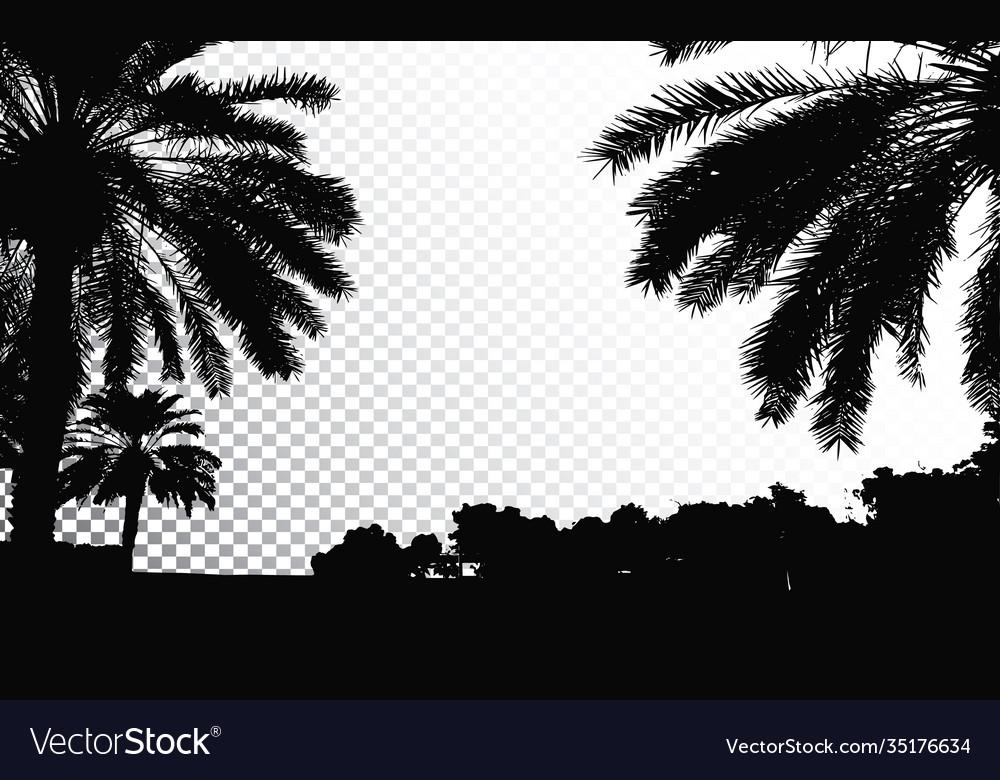 Palm trees silhouette coconut palm tree