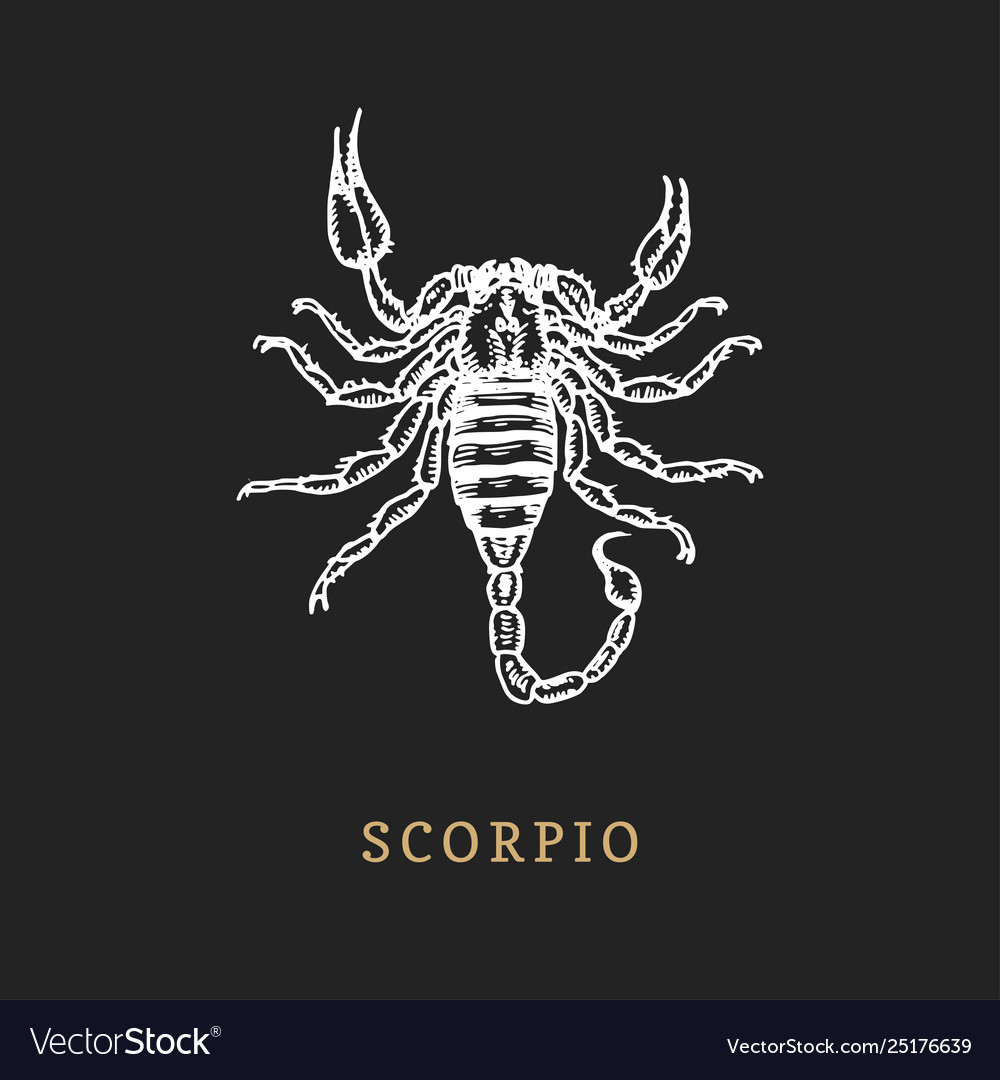 Scorpio zodiac symbol hand drawn in engraving