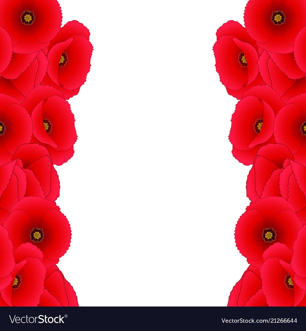 red corn poppy border royalty free vector image