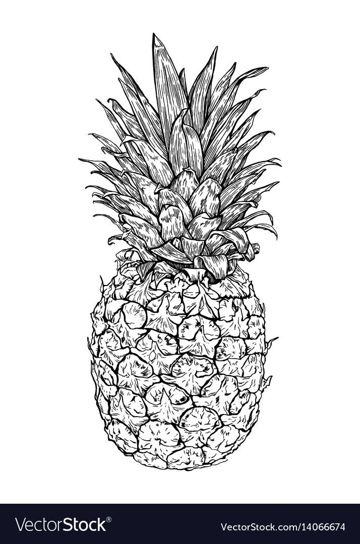 Hand drawn fresh pineapple