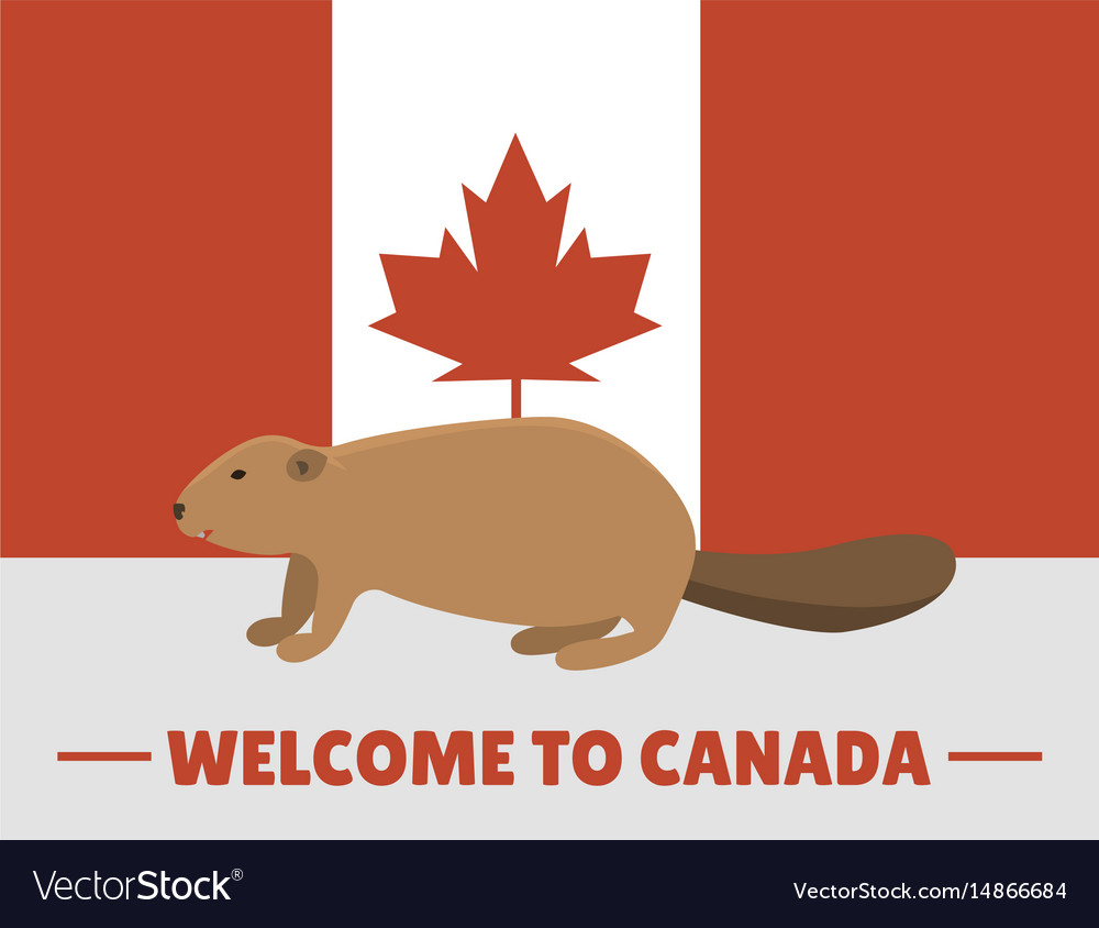 Brown beaver animal character mammal on canada red vector image