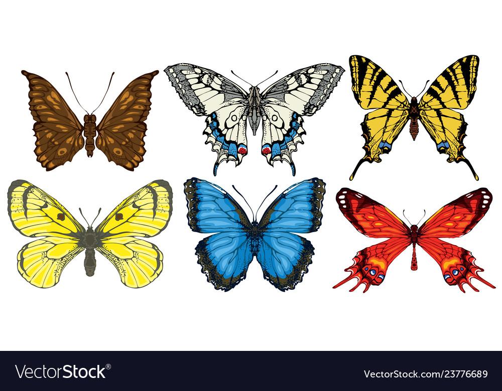 Set various bright colorful butterflies