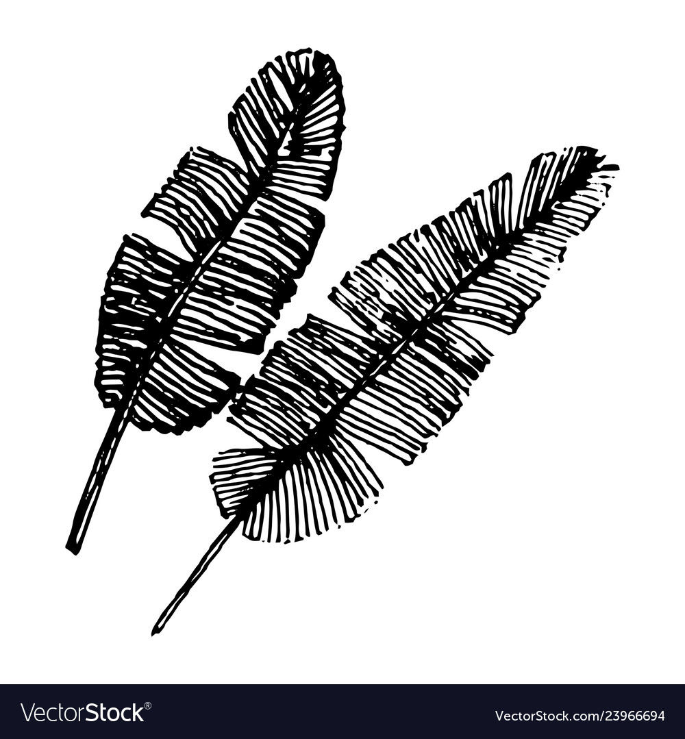 Concept of tropical leaf music