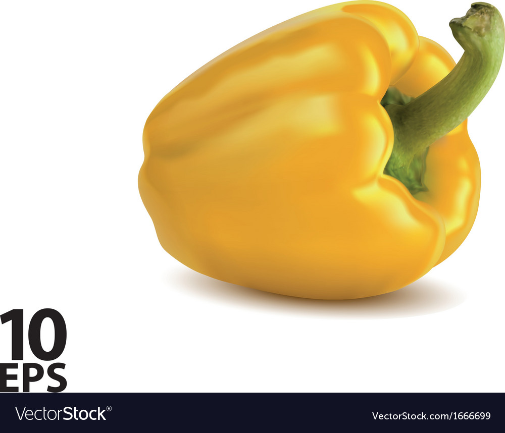 Paprika yellow isolated vector image