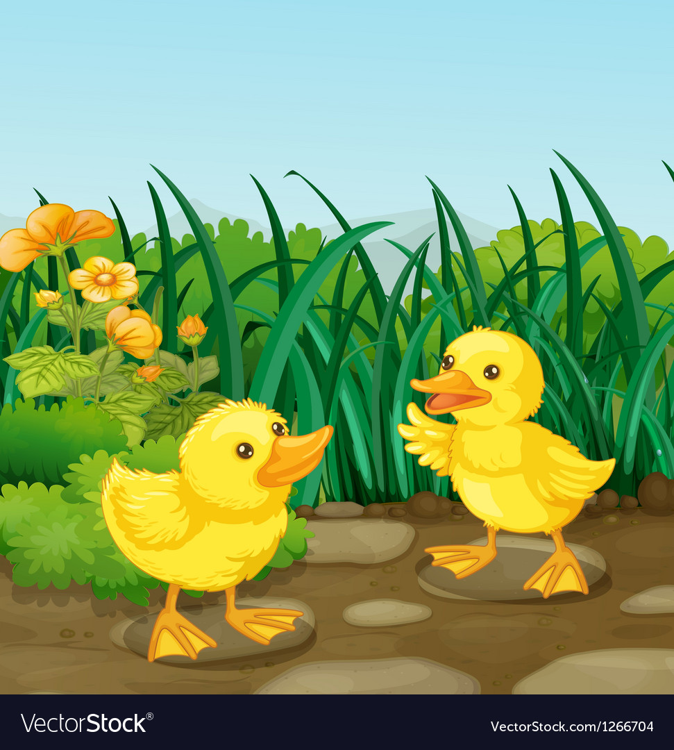 two little ducks in the garden royalty free vector image