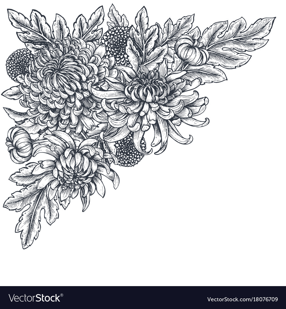 Bouquet with hand drawn chrysanthemum vector image