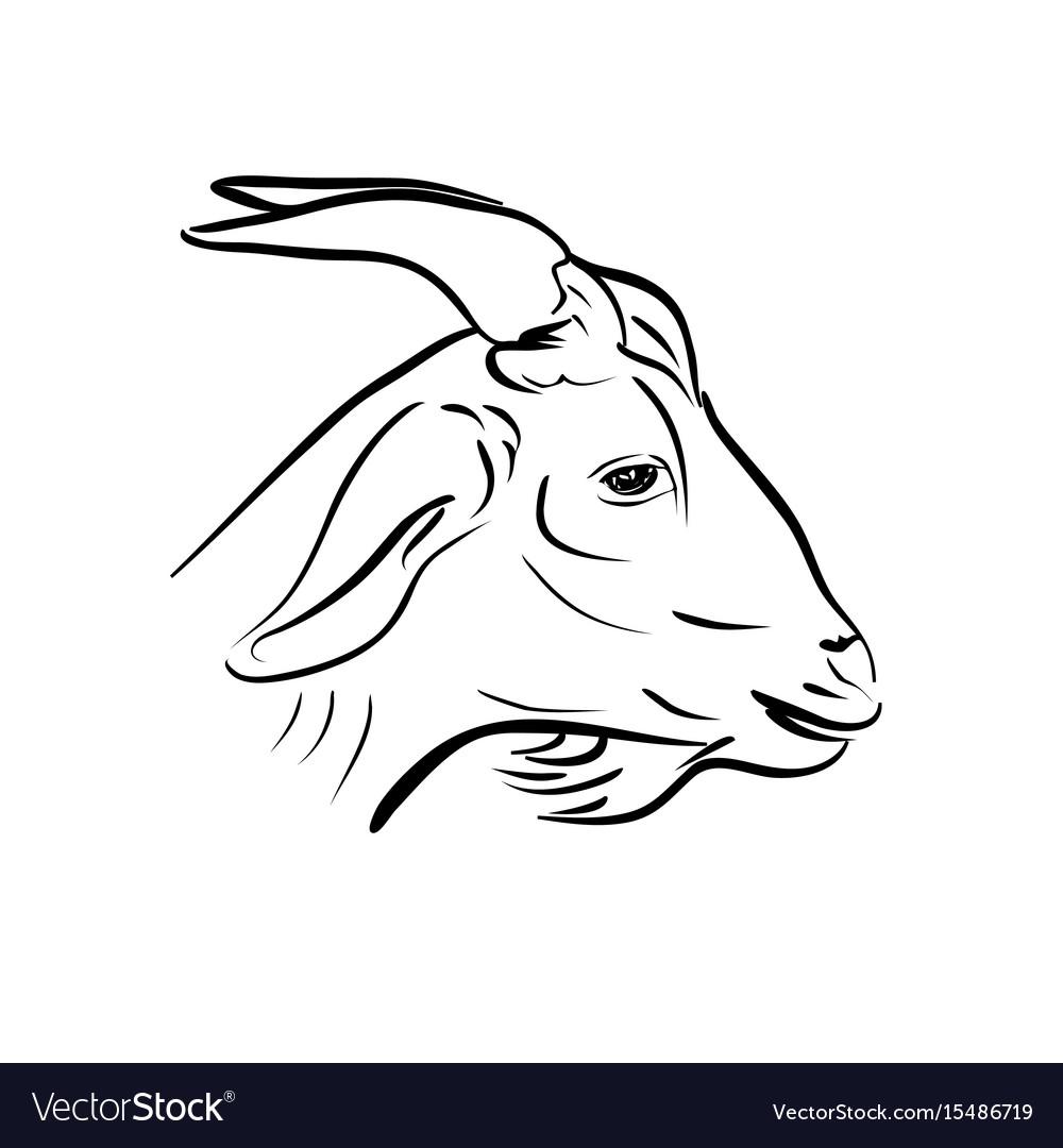 Line art of goat head on white vector image