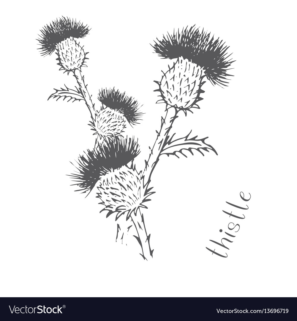 Thistle painted with hand