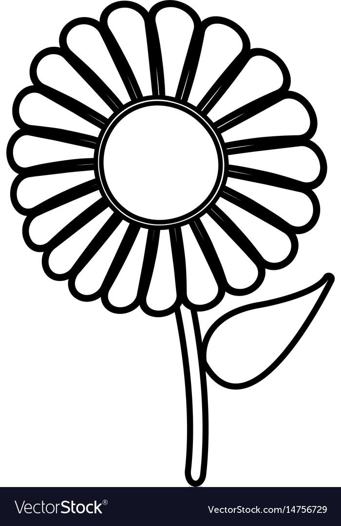 Beautiful single daisy flower outline