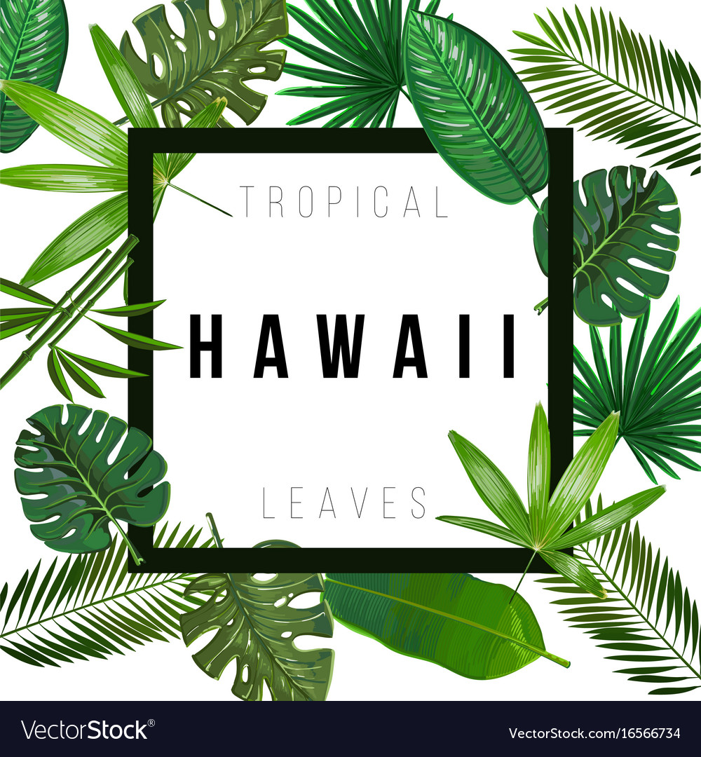 Tropical Leaves On White Background Royalty Free Vector Ornamental curly swirls background | designed by vexels.com. vectorstock